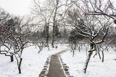Hill ανθών δαμάσκηνων snowscape Στοκ Φωτογραφίες