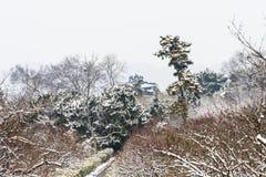 Hill ανθών δαμάσκηνων snowscape Στοκ εικόνα με δικαίωμα ελεύθερης χρήσης