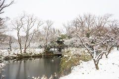Hill ανθών δαμάσκηνων snowscape Στοκ Εικόνες