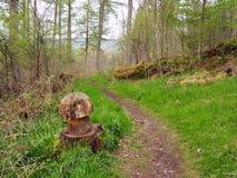 Hill και νεράιδα Knowe, Aberfoyle Doon Στοκ φωτογραφία με δικαίωμα ελεύθερης χρήσης