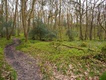 Hill και νεράιδα Knowe, Aberfoyle Doon Στοκ Εικόνα