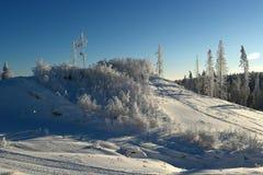 Hill με τους θάμνους και τα δέντρα Στοκ εικόνα με δικαίωμα ελεύθερης χρήσης