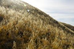Hill σιταριού Στοκ φωτογραφία με δικαίωμα ελεύθερης χρήσης