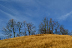 Hill. Landscape with trees on a hill Royalty Free Stock Photo