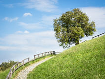 Hill. Tree at a hill near rome - nice background Royalty Free Stock Images