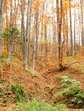 Hill autumn forest landscape Royalty Free Stock Image