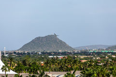 Hill Beyond Palm Trees on Aruba Royalty Free Stock Photo