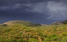 Hill with Cactus plants. On a stormy day Royalty Free Stock Image