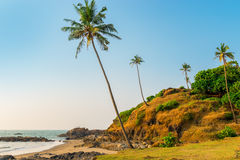 Hill with coconut palm trees in a tropical resort Stock Photos