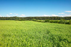 Hill country field Royalty Free Stock Images
