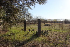 Hill country field Stock Image