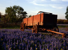 Hill country, Texas. Hill country near Austin Texas with Wagon in field of Bliue bonnets Royalty Free Stock Photo