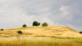 Hill covered by golden grass Royalty Free Stock Image