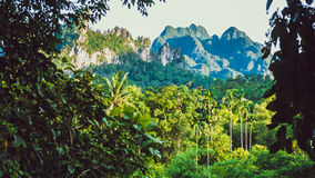 Hill Covered by Jungle in Khao Sok, Suratani, Thailand.  Stock Photography