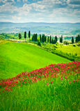 Flower Hill and Cypresses Royalty Free Stock Image