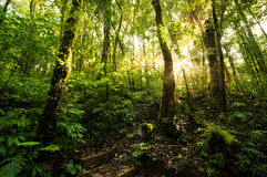 Hill Evergreen Forest Royalty Free Stock Photos