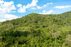 Hill Evergreen Forest,Khao Yai National Park ,Thailand Stock Photo