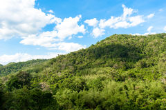 Hill Evergreen Forest,Khao Yai National Park ,Thailand Royalty Free Stock Photography