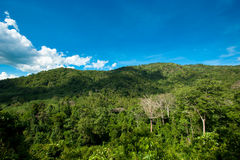 Hill Evergreen Forest,Khao Yai National Park, Thailand Stock Photography
