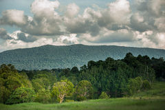 Hill Evergreen Forest,Khao Yai National Park ,Thailand Royalty Free Stock Images