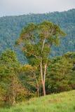 Hill Evergreen Forest,Khao Yai National Park,Thailand Stock Photos