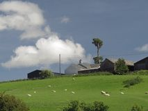 Hill farm grey, old, with single high tree dominating. A hill farm in sheep country, a single tall tree dominating, sheep in sloping meadows royalty free stock photo