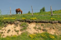 Hill fence horse Royalty Free Stock Photography