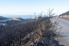 The hill after fire. Slope of the hill after fire, Zakynthos Island, Greece stock photography