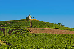 Hill of Fleurie village during, Beaujolais, France Stock Image