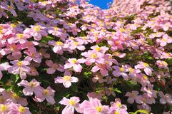 Hill of flowers Royalty Free Stock Photos