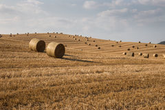 Hill full of haybales Royalty Free Stock Images