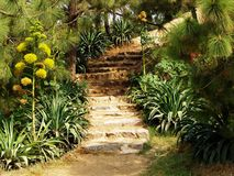Hill Garden. And steps upward royalty free stock images