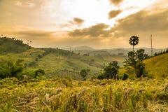 Hill with golden sunlight Stock Photos