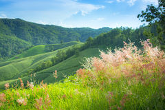 Hill with Grass Flowers Stock Photos