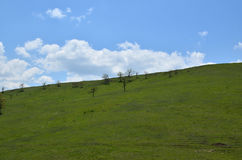 Hill, Grass and Sky With Clouds Royalty Free Stock Photography