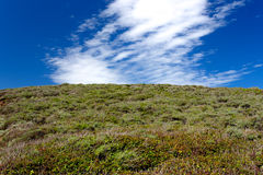 Hill of Green Foliage Lookup Up Toward Brilliant Blue Sky With C. Louds royalty free stock images