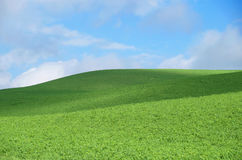 Hill with green grass. With blue sky over the hill royalty free stock photography
