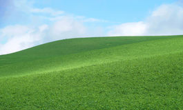 Hill with green grass. Outdoor hill with green grass royalty free stock images