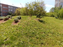 Hill with green grass and trees, bushes Stock Photography