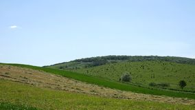 Hill with green trees and fields stock footage