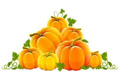 Hill harvest of orange ripe pumpkins Royalty Free Stock Photo