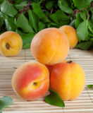 Hill juicy bright apricot Royalty Free Stock Photos