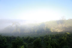 Hill with mist on the orange farm in the morning sky Stock Photos