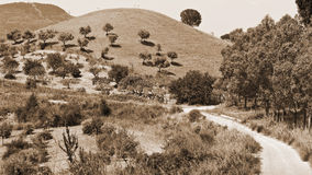 Hill with Olive Trees Royalty Free Stock Photos