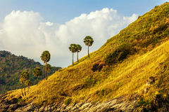 Hill with palm trees Stock Images