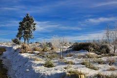 Hill Pancíř, Cloudes and trees, winter landscape in Šumava in Železná Ruda, czech republic Royalty Free Stock Photos