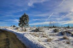 Hill Pancíř, Cloudes and trees, winter landscape in Šumava in Železná Ruda, czech republic Stock Photography