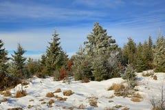 Hill Pancí�, Cloudes and trees, winter landscape in Šumava in Železná Ruda, czech republic Stock Photography