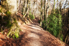 Hill path. Hills landscape with walking path and trees Stock Images