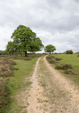 Hill path in the New Forest, Hampshire stock images